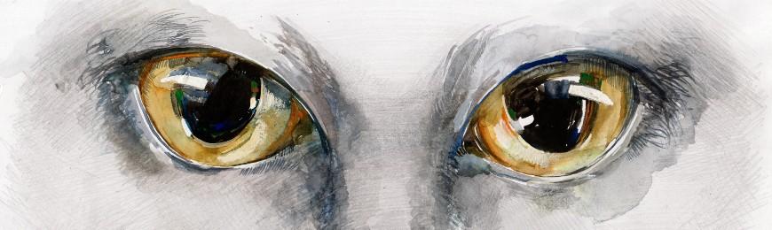 Animal Art by Wall Art Prints