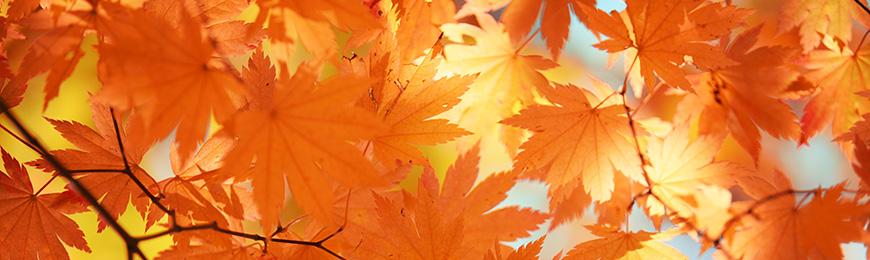 Autumn Art by Wall Art Prints