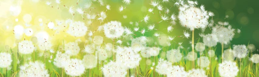 Spring Pictures by Wall Art Prints