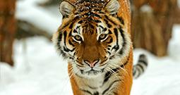 Wall Art Prints - Animal Photography